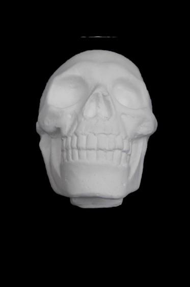 Wooden Mannequin & Models: Human Anatomy Skull Model