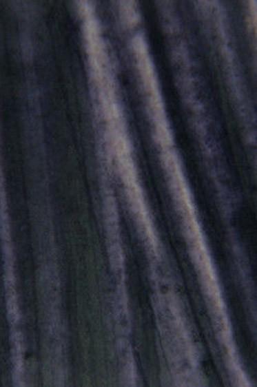 Encaustic Paints: Payne's Grey 40ml