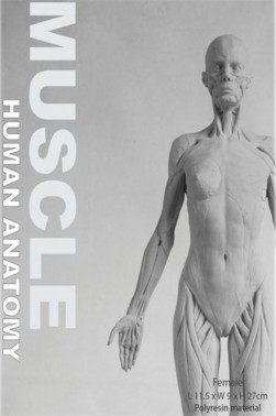 Wooden Mannequins & Models: Human Anatomy Female Muscles