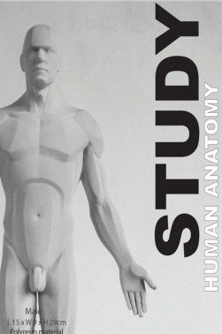 Wooden Mannequin & Models: Human Anatomy Male Study