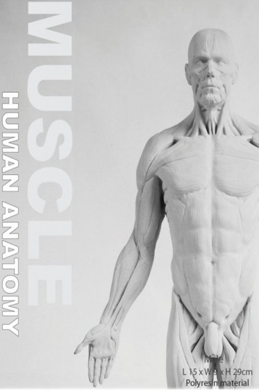 Wooden Mannequin & Models: Human Anatomy Male Muscle