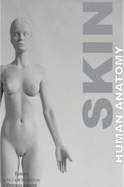 Wooden Mannequin & Models: Human Anatomy Female Skin