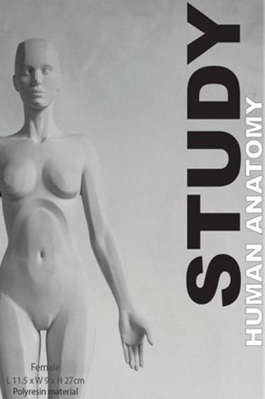 Wooden Mannequin & Models: Human Anatomy Female Study